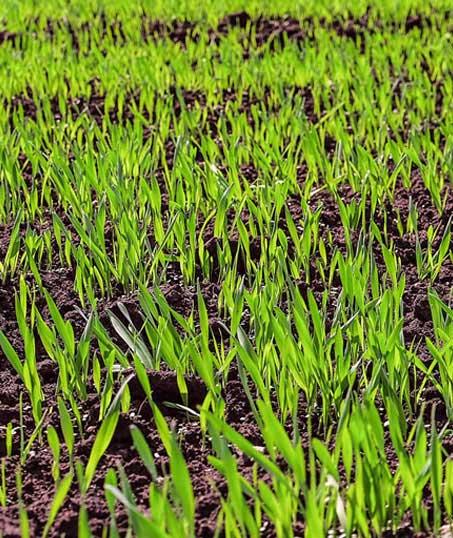 A A Green Landscaping LLC Hydroseeding