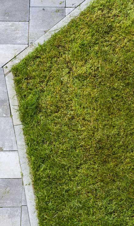 A A Green Landscaping LLC Lawn Dethatching