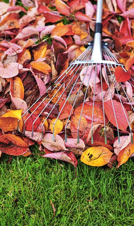 A A Green Landscaping LLC Fall Clean Up